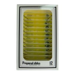 Додаткове зображення Набір мікропрепаратів SIGETA ENTRANCE Життєві цикли рослин (12 шт.) №1